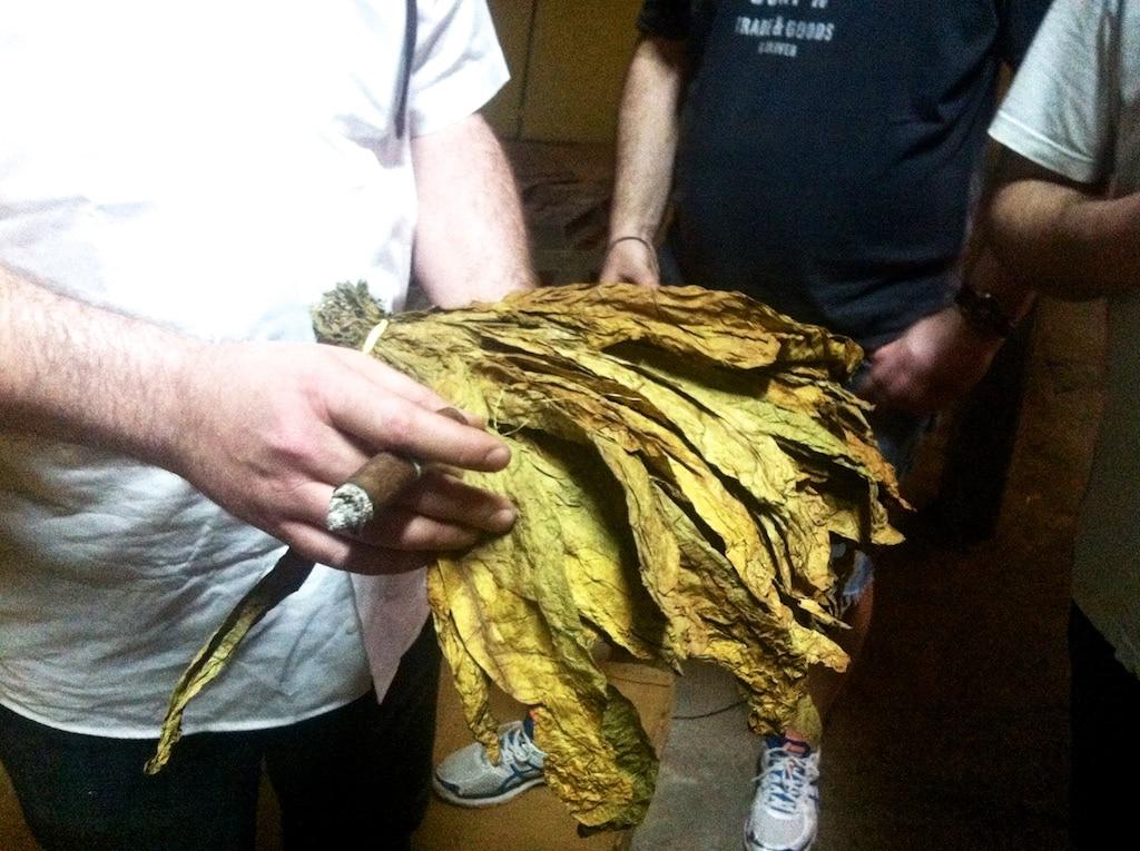 Tabakblätter für Zigarren