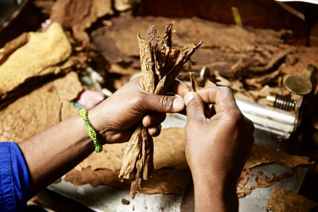 Kubanische Zigarren frisch gerollt