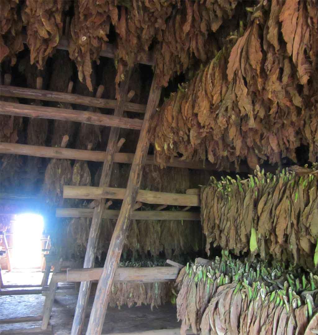 Kubanische Zigarren Trockenschuppen