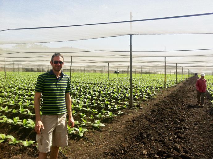 Tabakfeld bei Plasencia in Nicaragua